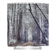 Big Sur State Park Shower Curtain by Jane Linders