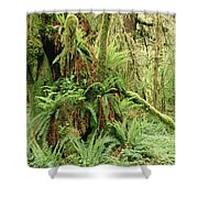 Bigleaf Maple Acer Macrophyllum Trees Shower Curtain by Gerry Ellis