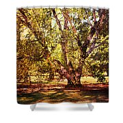 Birch Tree Shower Curtain by Jai Johnson