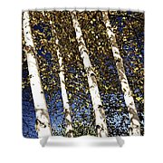 Birch Trees In Fall Shower Curtain by Elena Elisseeva