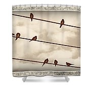 Birds On Wires Shower Curtain by Susan Kinney