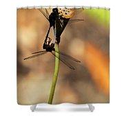 Black Dragonfly Love Shower Curtain by Sabrina L Ryan