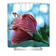 Blossoming Pink Hibiscus Flower Shower Curtain by Karon Melillo DeVega