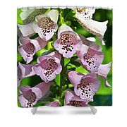 Blow The Trumpet Flora Shower Curtain by Andee Design