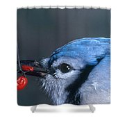 Blue Jay Shower Curtain by Photo Researchers, Inc.