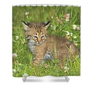 Bobcat Kitten Shower Curtain by John Pitcher
