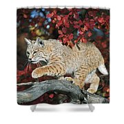 Bobcat Walks On Branch Through Hawthorn Shower Curtain by David Ponton