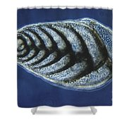 Bolivina Robusta Lm Shower Curtain by Eric V. Grave