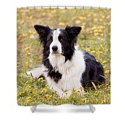 Border Collie In Field Of Yellow Flowers Shower Curtain by Michelle Wrighton