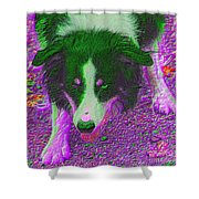 Border Collie Stare In Colors Shower Curtain by Smilin Eyes  Treasures