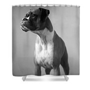 Boxer Dog Shower Curtain by Stephanie McDowell