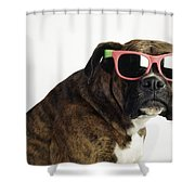 Boxer Wearing Sunglasses Shower Curtain by Ron Nickel