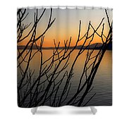 Branches In The Sunset Shower Curtain by Joana Kruse