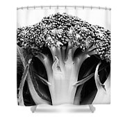 Broccoli on white background Shower Curtain by Gaspar Avila