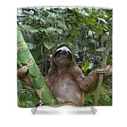 Brown Throated Three Toed Sloth Male Shower Curtain by Suzi Eszterhas