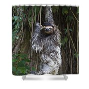 Brown Throated Three Toed Sloth Mother Shower Curtain by Suzi Eszterhas