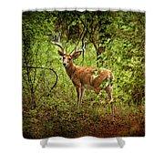 Buck In Full Velvet Shower Curtain by Tamyra Ayles