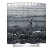 Buffalo And Monsoon Rain Shower Curtain by Anonymous