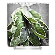 Bunch of fresh sage Shower Curtain by Elena Elisseeva