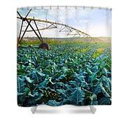 Cabbage Growth Shower Curtain by Carlos Caetano