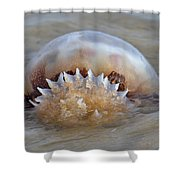Cabbage Head Jellyfish Shower Curtain by Betsy C  Knapp