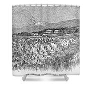 California: Vineyard, 1889 Shower Curtain by Granger