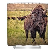Call Of The Bison Shower Curtain by Tamyra Ayles