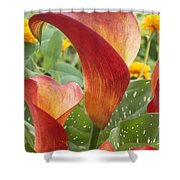 Calla Lily Zantedeschia Sp Captain Shower Curtain by VisionsPictures