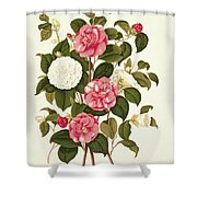 Camellia Shower Curtain by English School