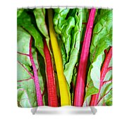 Candy Color Greens Shower Curtain by Susan Herber