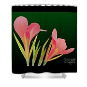Canna Lilly Whimsy Shower Curtain by Rand Herron