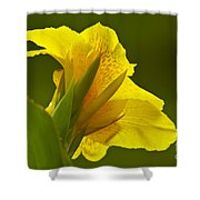 Canna Lily Shower Curtain by Heiko Koehrer-Wagner