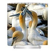 Cape Gannet Courtship Shower Curtain by Bruce J Robinson
