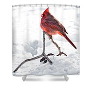 Cardinal In Snow Shower Curtain by Tamyra Ayles