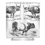 Cattle Breeds, 1856 Shower Curtain by Granger