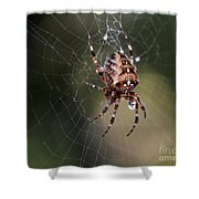 Charlottes Bigger Friend Shower Curtain by Bob Christopher
