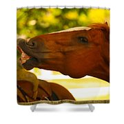 Cheese Shower Curtain by Cheryl Young