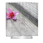 Cherry Blossom On Bench Shower Curtain by Lisa Phillips