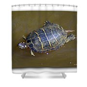 Chester River Turtle Shower Curtain by Brian Wallace