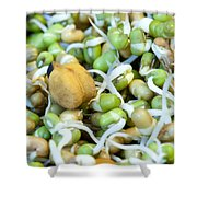 Chickpea And Other Lentils In The Form Of Healthy Eatable Sprouts Shower Curtain by Ashish Agarwal