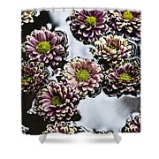 Chrysanthemum 3 Shower Curtain by Skip Nall