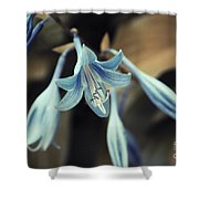 Cladis 22 Shower Curtain by Variance Collections