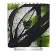 Close-up Of Seaweed In Water Shower Curtain by Axiom Photographic