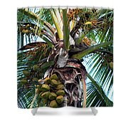 Coconut Palm Inflorescence Shower Curtain by Karon Melillo DeVega