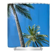 Coconuts  Shower Curtain by Atiketta Sangasaeng