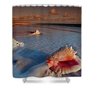 Conch Shell On Beach Shower Curtain by Novastock and Photo Researchers