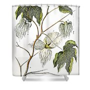 Cotton Plant, 1796 Shower Curtain by Granger