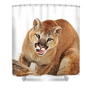 Cougar With Prey Shower Curtain by Richard Wear