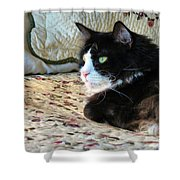 Country Kitty Shower Curtain by Michelle Milano