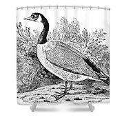 Cravat Goose Shower Curtain by Granger